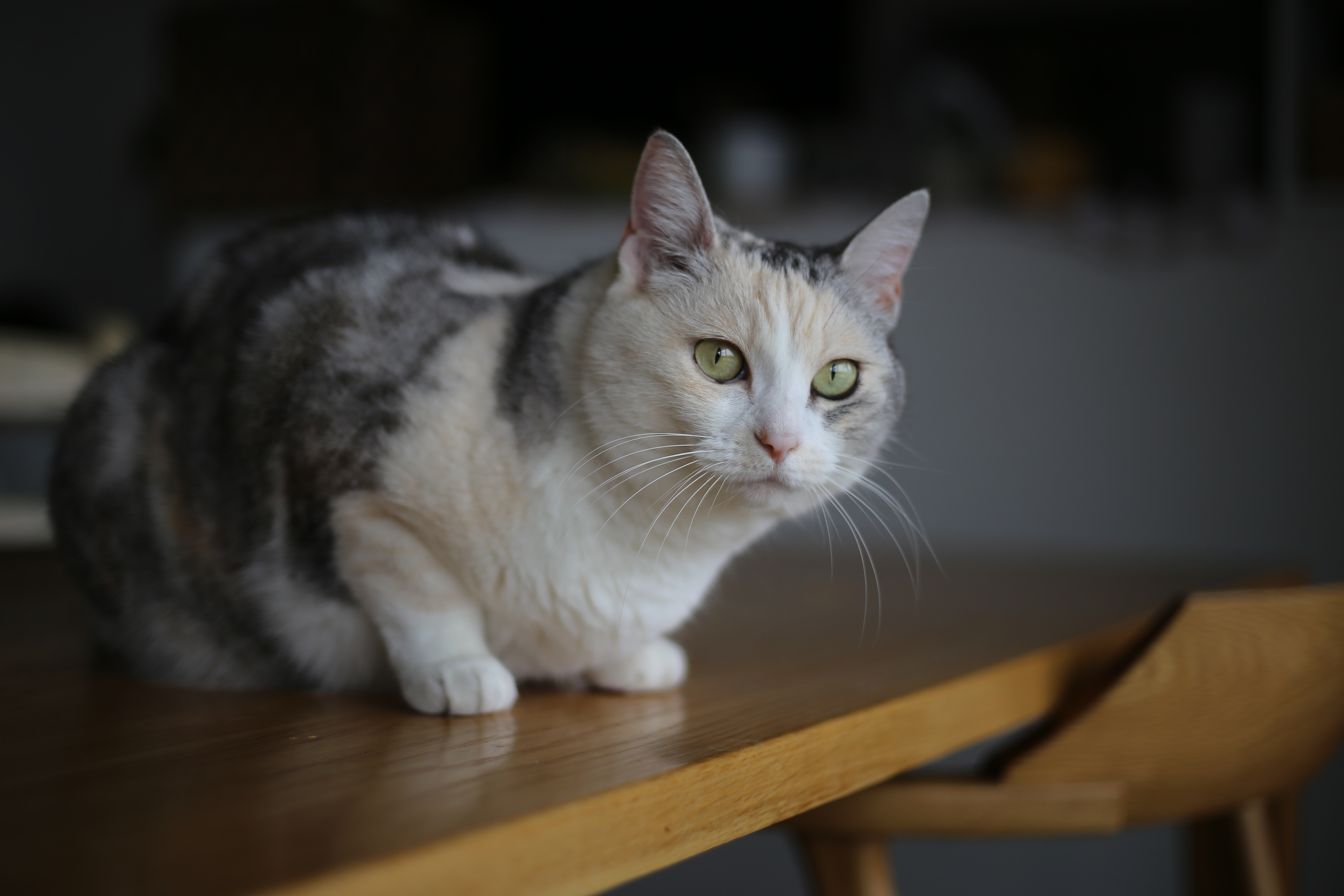 猫のエサを毎朝あげているのは